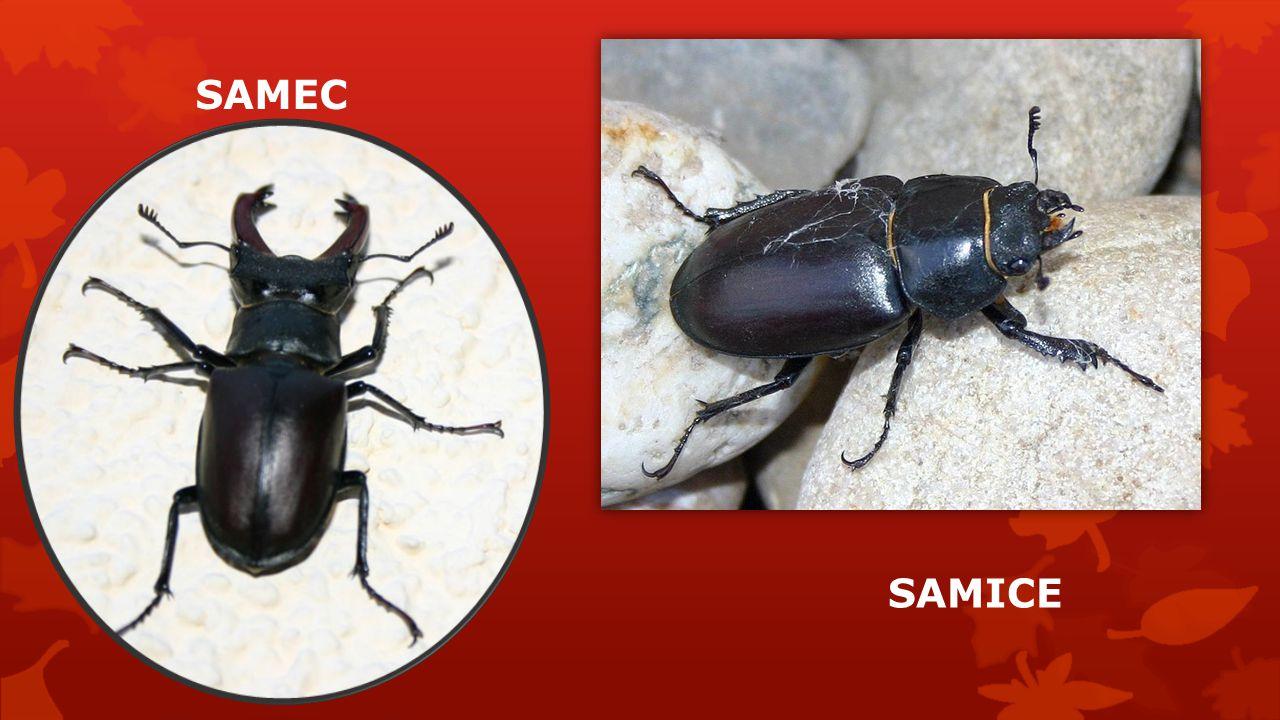 SAMEC SAMICE