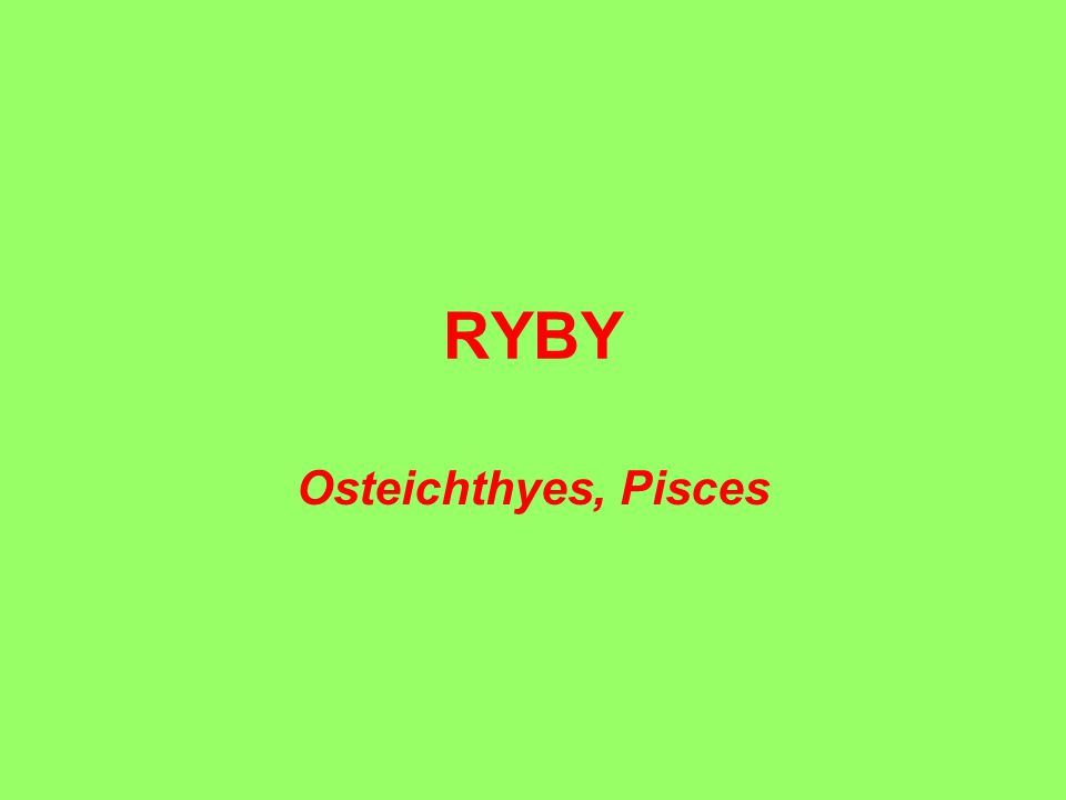 RYBY Osteichthyes, Pisces