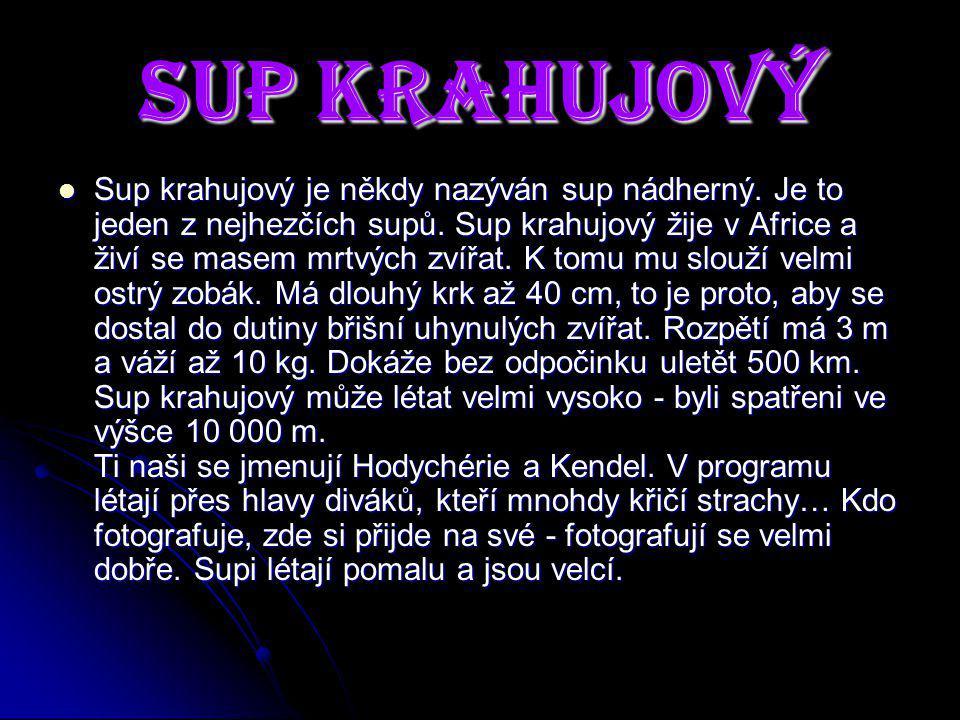 Sup Krahujový