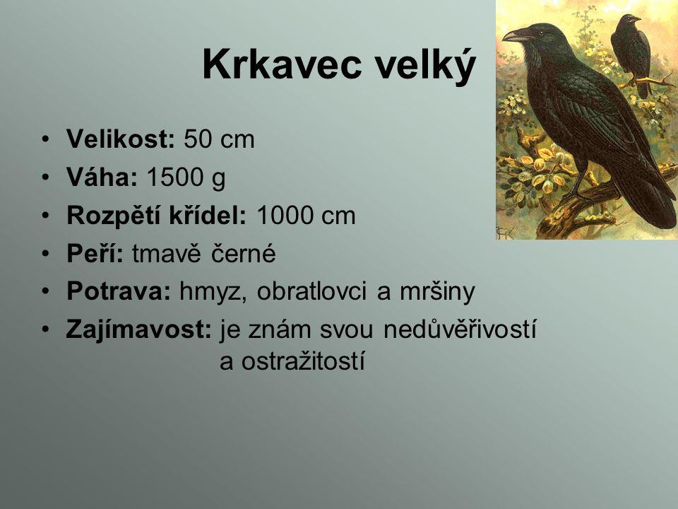 Krkavec velký Velikost: 50 cm Váha: 1500 g Rozpětí křídel: 1000 cm