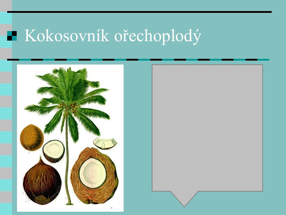 Kokosovník ořechoplodý