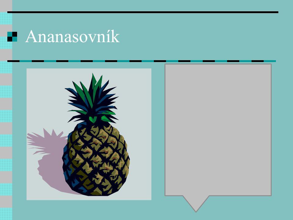 Ananasovník