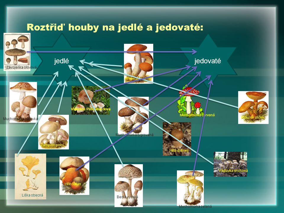 Roztřiď houby na jedlé a jedovaté: