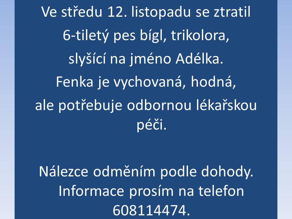 Ve středu 12. listopadu se ztratil 6-tiletý pes bígl, trikolora, slyšící na jméno Adélka.