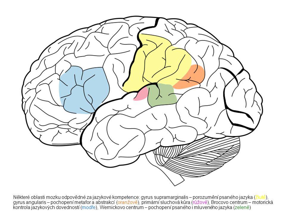 Některé oblasti mozku odpovědné za jazykové kompetence: gyrus supramarginalis – porozumění psaného jazyka (žlutě), gyrus angularis – pochopení metafor a abstrakcí (oranžově), primární sluchová kůra (růžově), Brocovo centrum – motorická kontrola jazykových dovedností (modře), Wernickovo centrum – pochopení psaného i mluveného jazyka (zeleně)