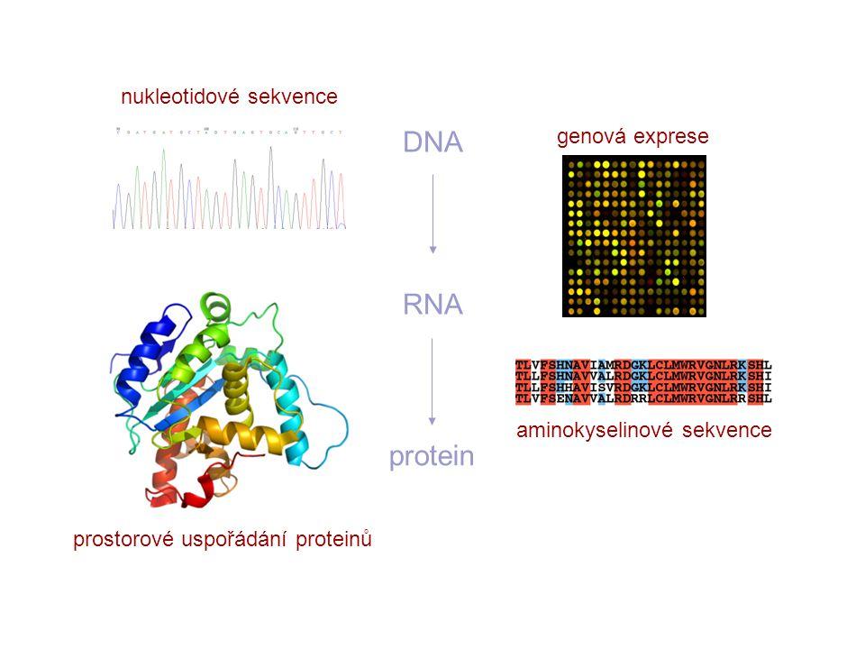 DNA RNA protein nukleotidové sekvence genová exprese