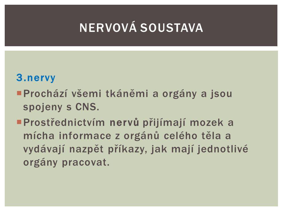 Nervová soustava 3.nervy