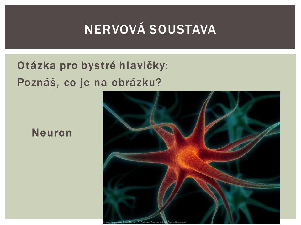 Nervová soustava Otázka pro bystré hlavičky: Poznáš, co je na obrázku Neuron
