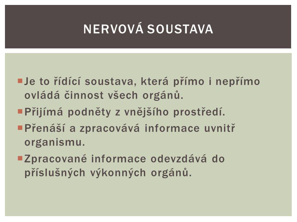 Nervová soustava Je to řídící soustava, která přímo i nepřímo ovládá činnost všech orgánů. Přijímá podněty z vnějšího prostředí.