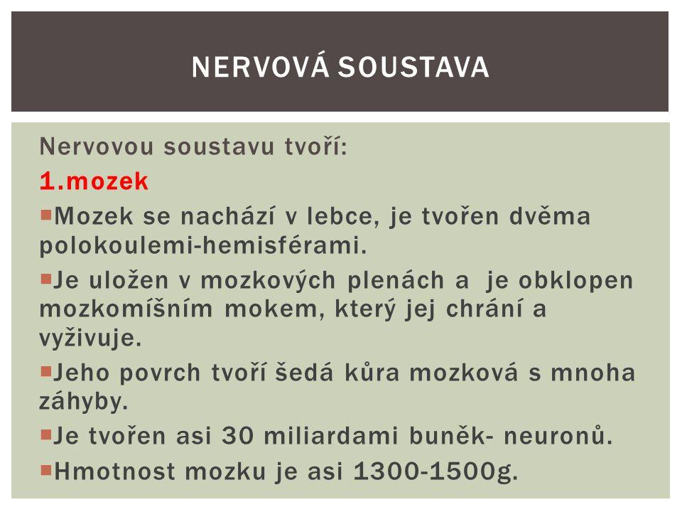 Nervová soustava Nervovou soustavu tvoří: 1.mozek