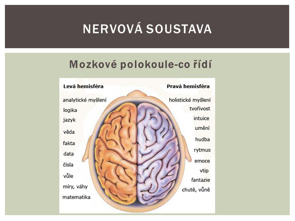 Nervová soustava Mozkové polokoule-co řídí