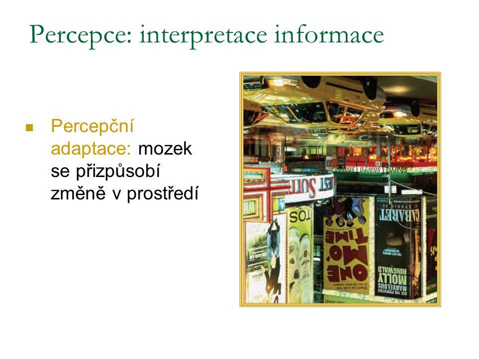 Percepce: interpretace informace