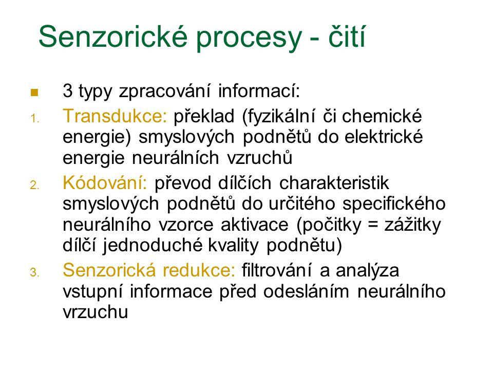 Senzorické procesy - čití