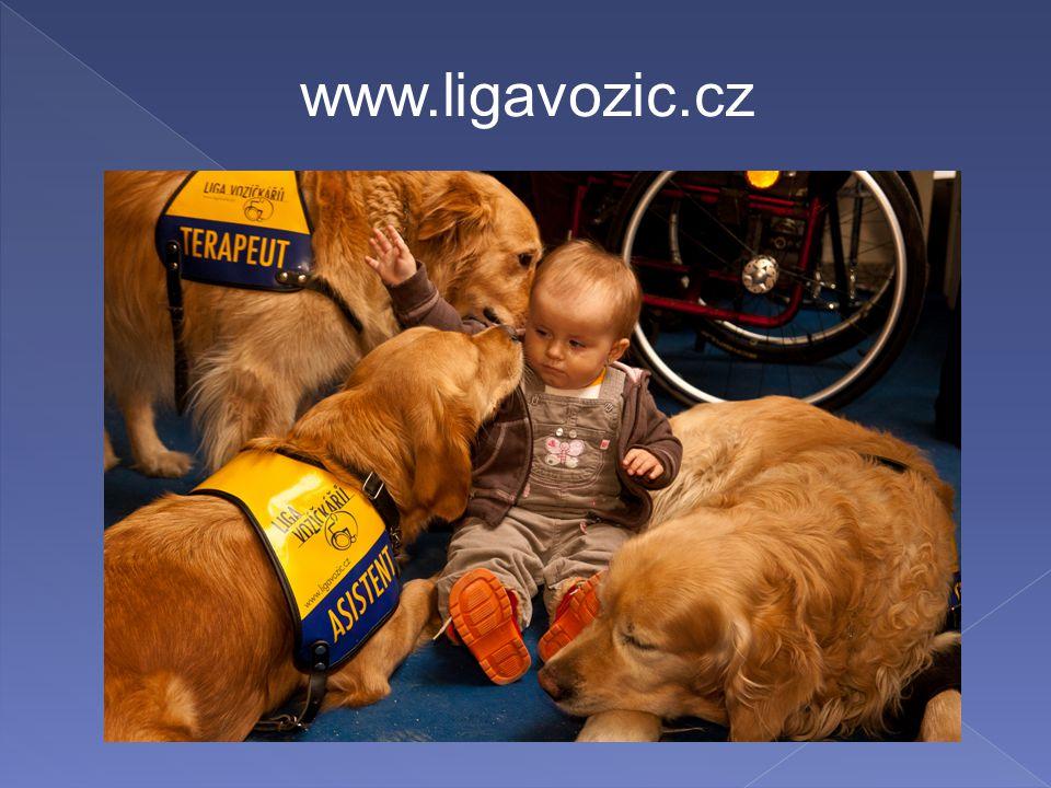 www.ligavozic.cz