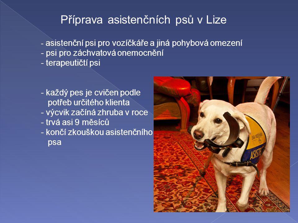 Příprava asistenčních psů v Lize