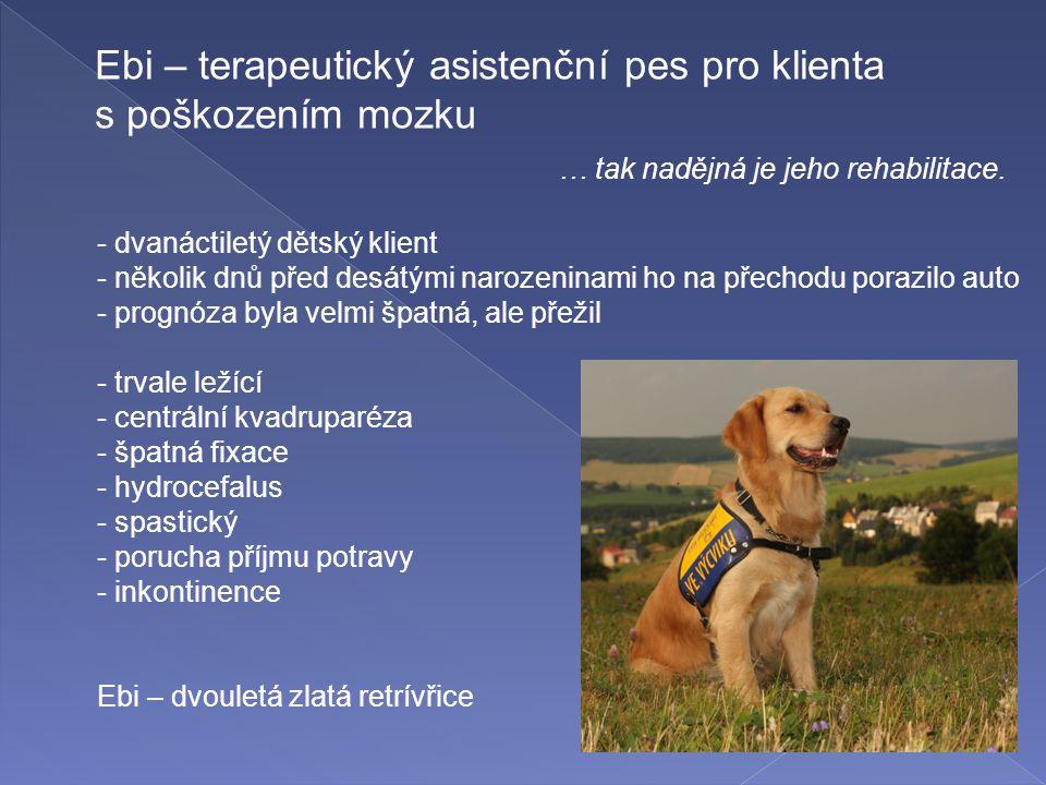 Ebi – terapeutický asistenční pes pro klienta s poškozením mozku