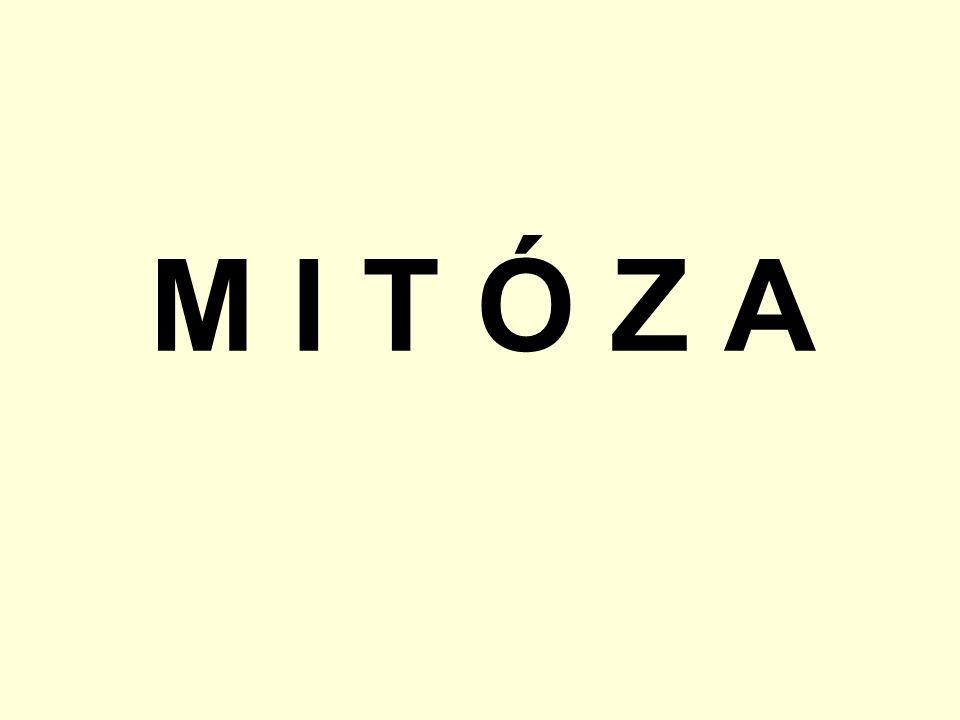 M I T Ó Z A