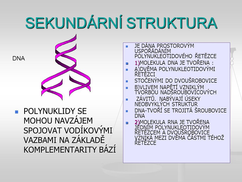 SEKUNDÁRNÍ STRUKTURA JE DÁNA PROSTOROVÝM USPOŘÁDÁNÍM POLYNUKLEOTIDOVÉHO ŘETĚZCE. 1)MOLEKULA DNA JE TVOŘENA :