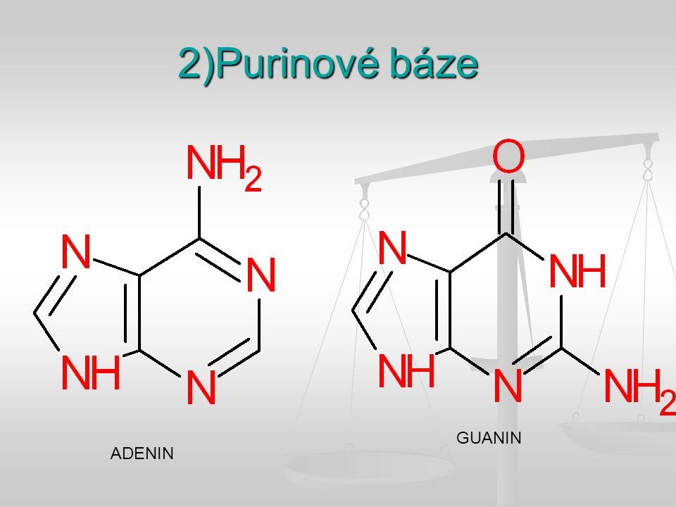 2)Purinové báze GUANIN ADENIN