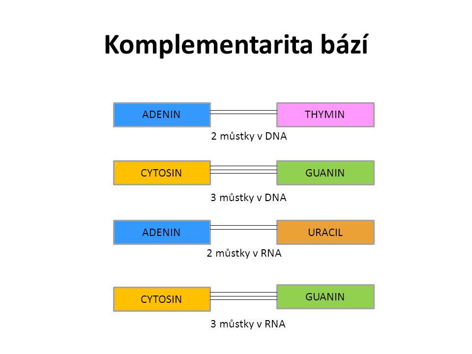 Komplementarita bází ADENIN THYMIN 2 můstky v DNA CYTOSIN GUANIN