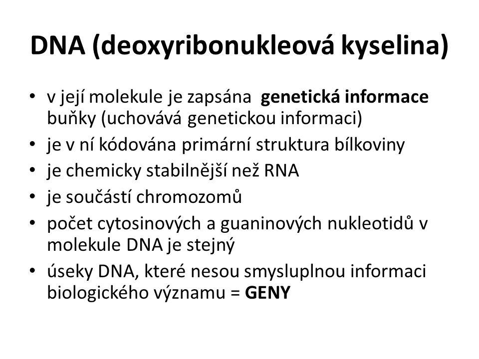 DNA (deoxyribonukleová kyselina)
