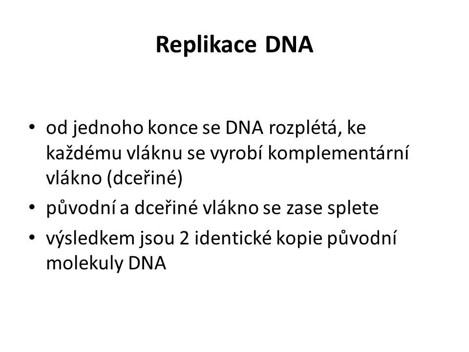 Replikace DNA od jednoho konce se DNA rozplétá, ke každému vláknu se vyrobí komplementární vlákno (dceřiné)