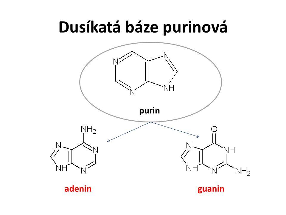 Dusíkatá báze purinová