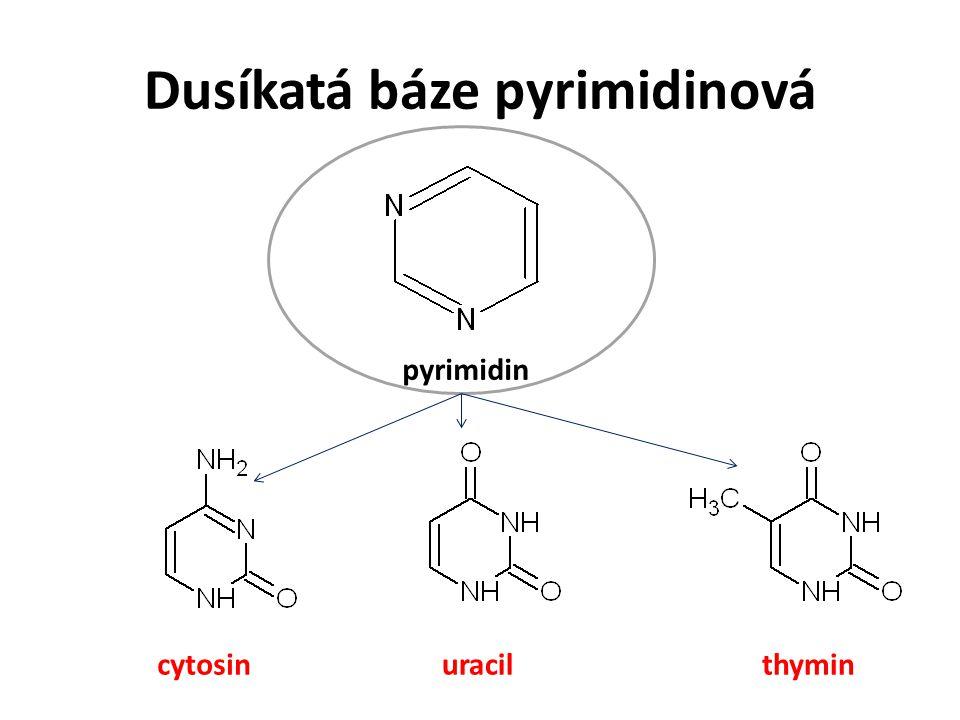 Dusíkatá báze pyrimidinová