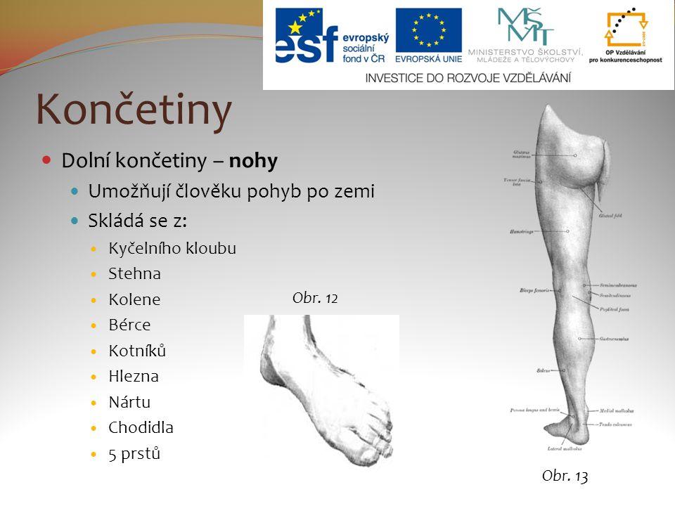 Končetiny Dolní končetiny – nohy Umožňují člověku pohyb po zemi