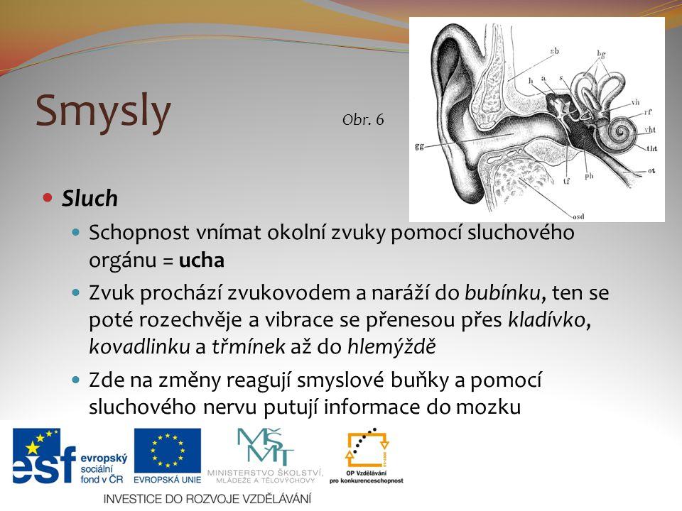 Smysly Obr. 6. Sluch. Schopnost vnímat okolní zvuky pomocí sluchového orgánu = ucha.