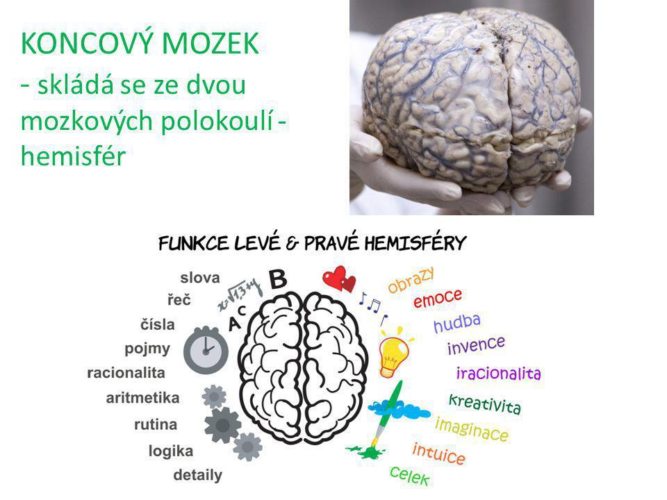 KONCOVÝ MOZEK - skládá se ze dvou mozkových polokoulí - hemisfér