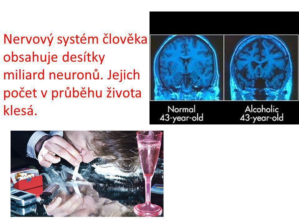 Nervový systém člověka obsahuje desítky miliard neuronů
