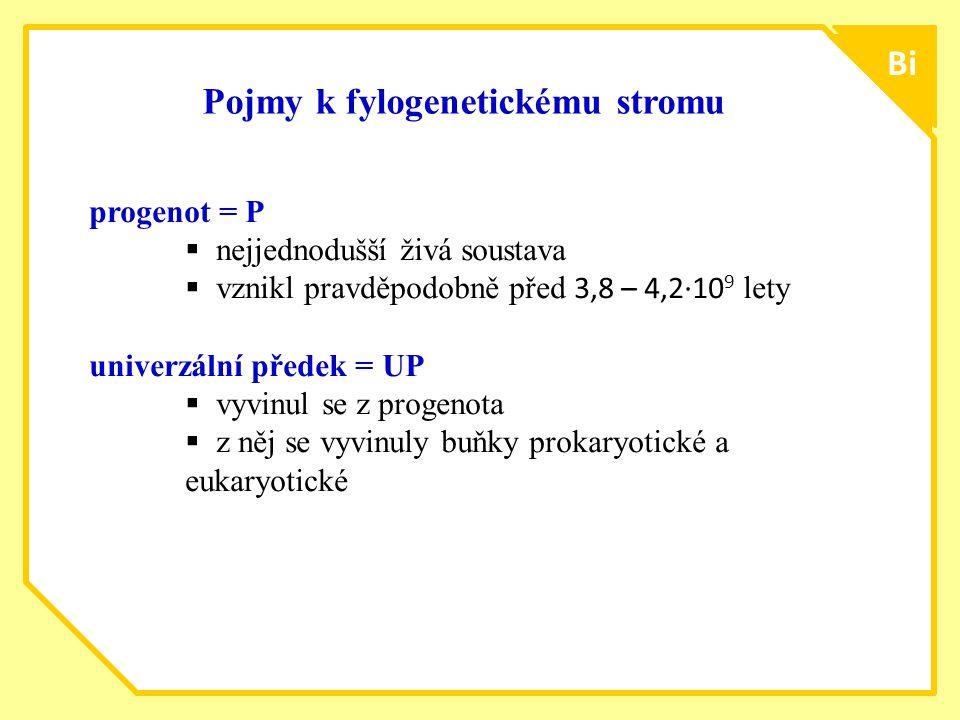 Pojmy k fylogenetickému stromu