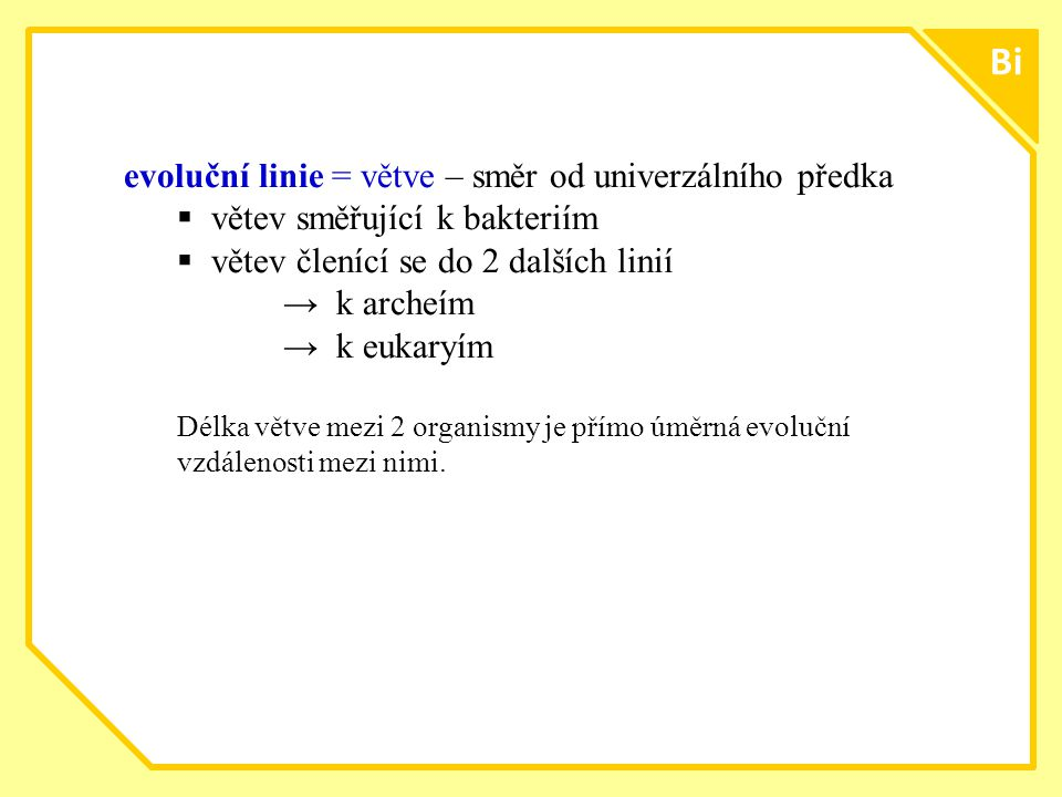 Bi evoluční linie = větve – směr od univerzálního předka