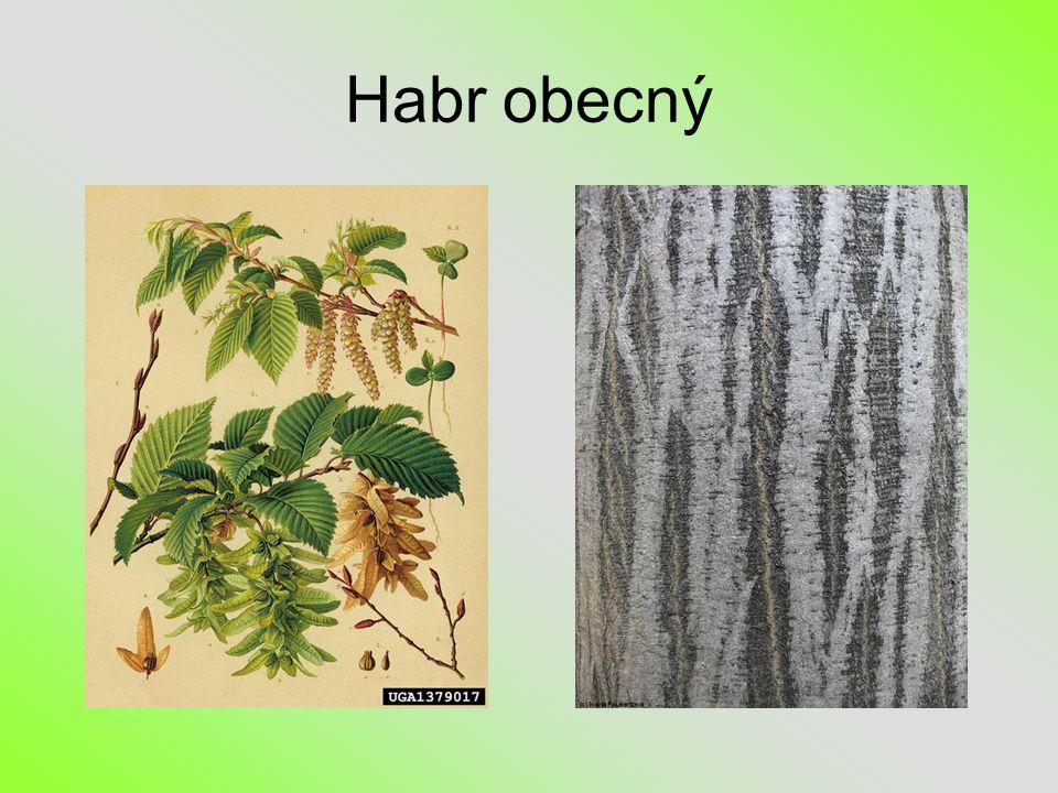 Habr obecný