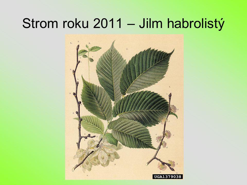 Strom roku 2011 – Jilm habrolistý