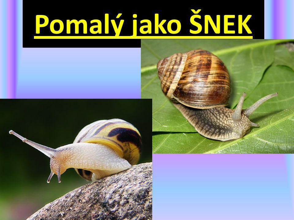 Pomalý jako ŠNEK