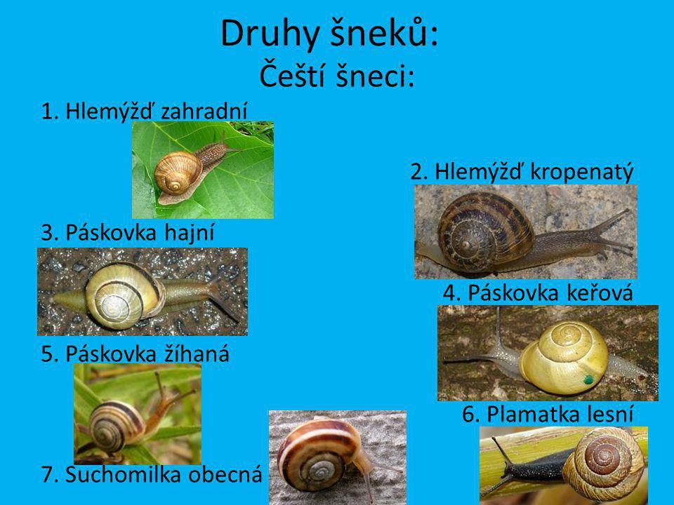 Druhy šneků: Čeští šneci: 1. Hlemýžď zahradní 2. Hlemýžď kropenatý