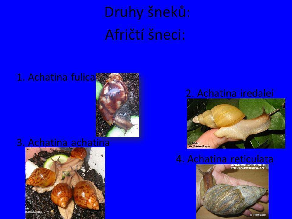 Druhy šneků: Afričtí šneci: 1. Achatina fulica 2. Achatina iredalei