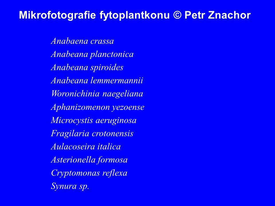 Mikrofotografie fytoplantkonu © Petr Znachor