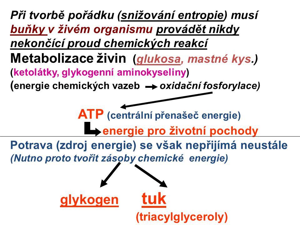 energie pro životní pochody