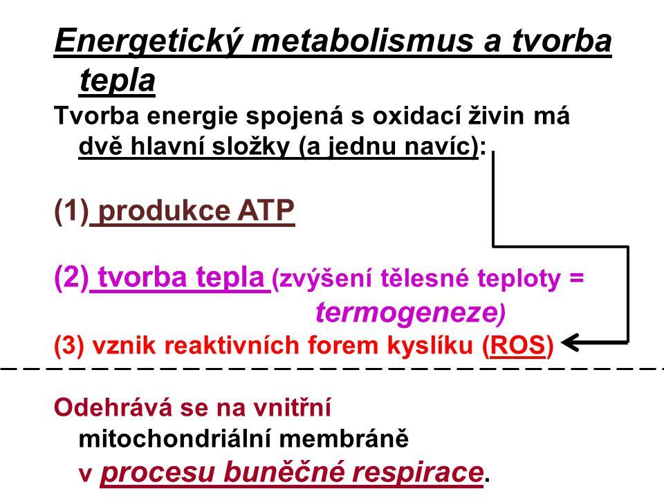 Energetický metabolismus a tvorba tepla