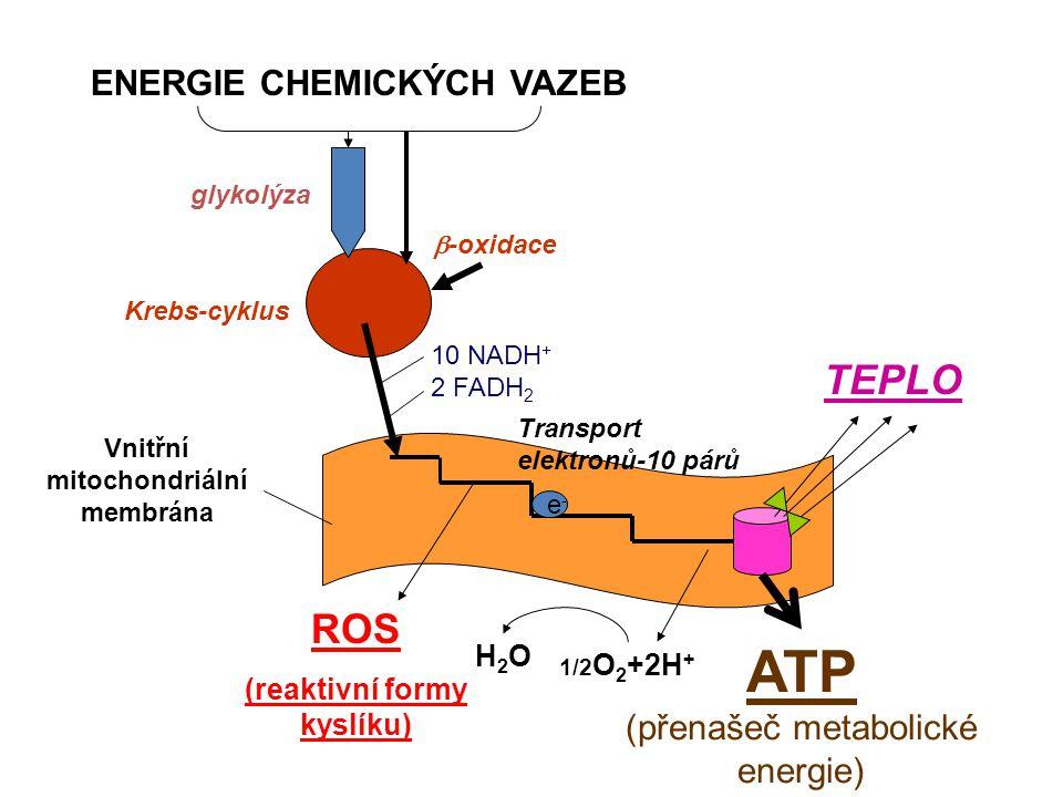 (reaktivní formy kyslíku)