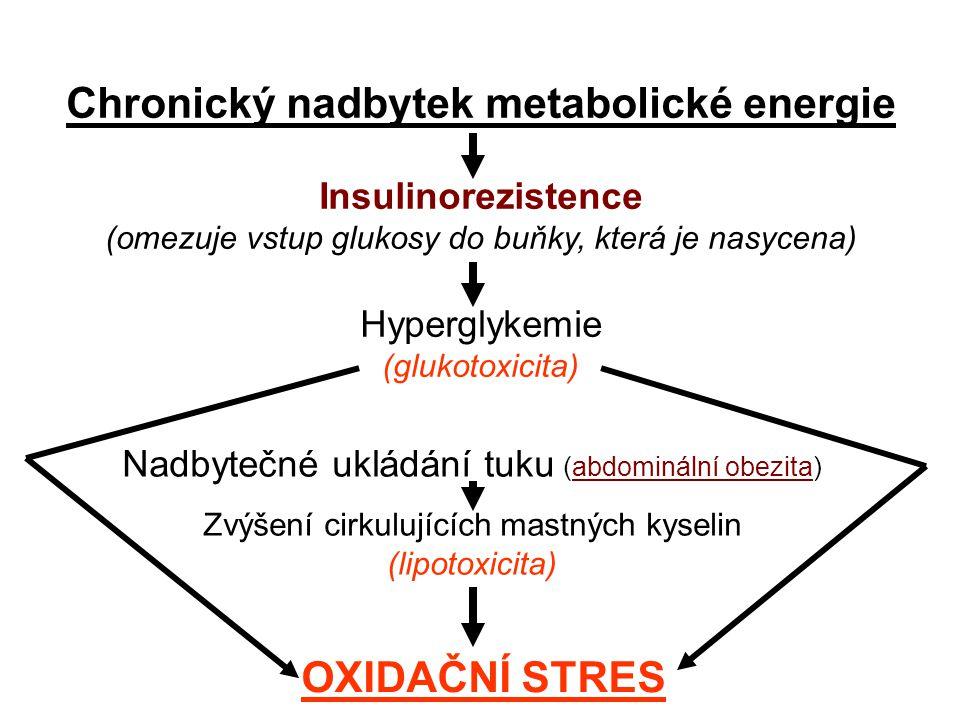 Chronický nadbytek metabolické energie