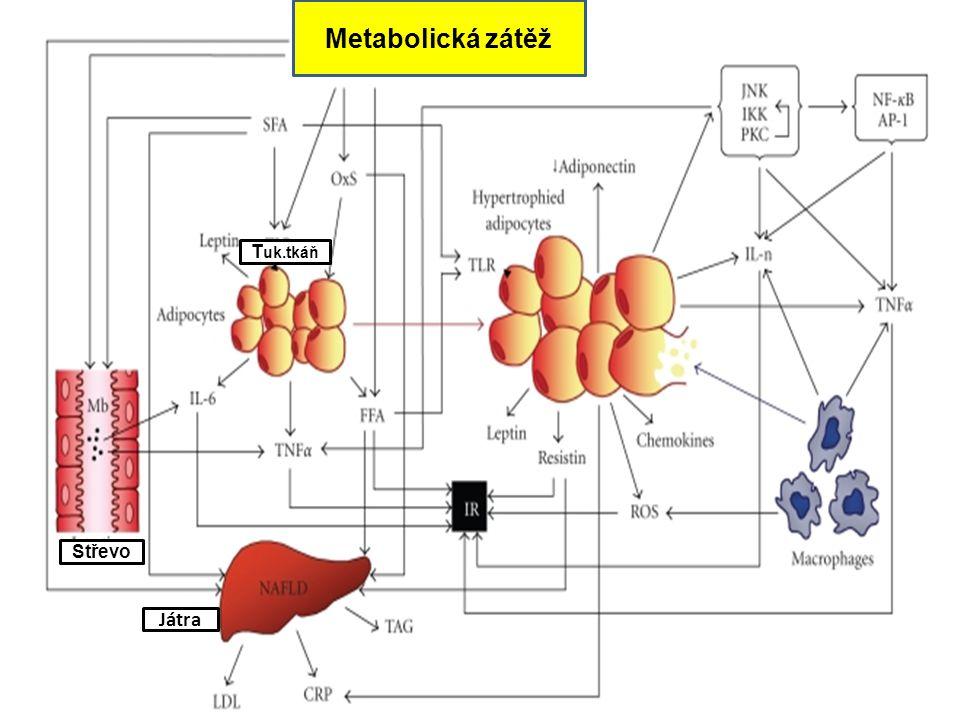 Metabolická zátěž Tuk.tkáň Střevo Játra