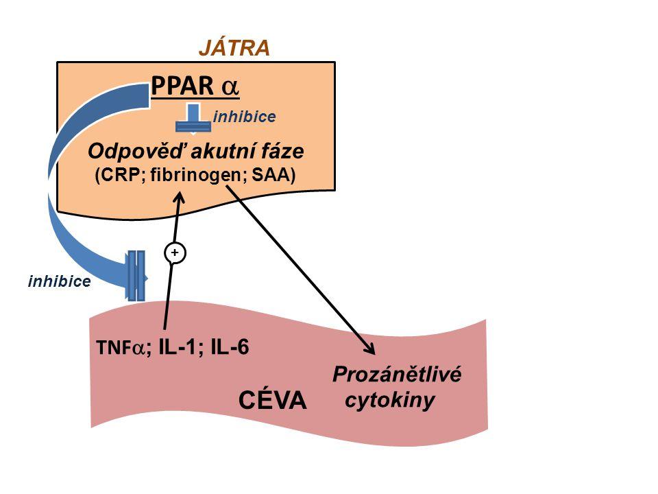 Odpověď akutní fáze (CRP; fibrinogen; SAA)