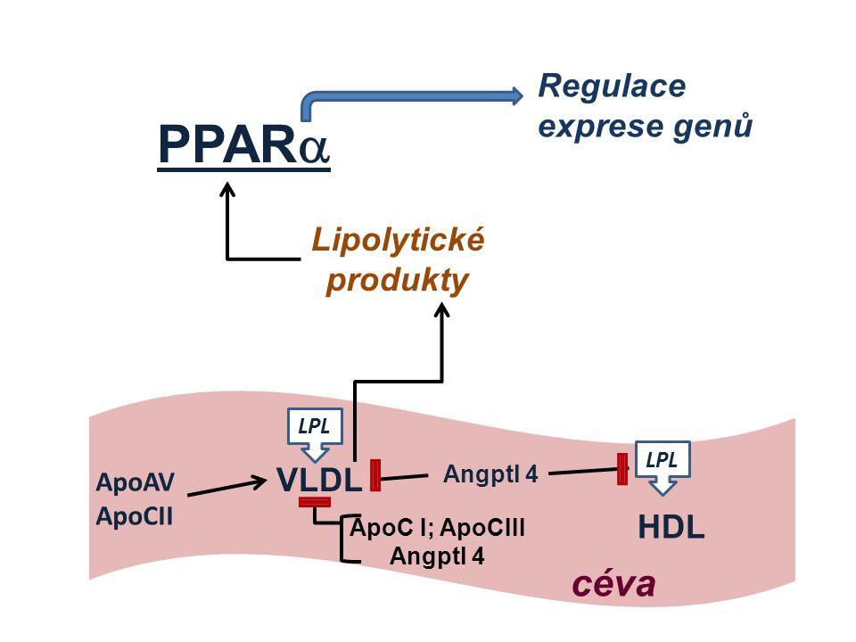 PPARa céva Regulace exprese genů Lipolytické produkty VLDL HDL