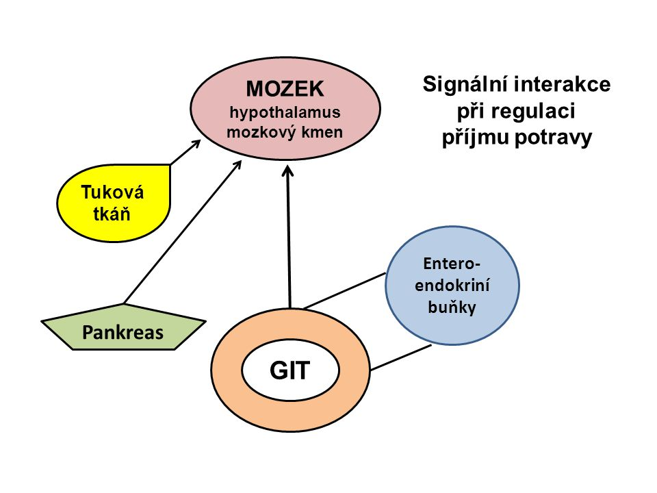 Signální interakce při regulaci příjmu potravy Entero- endokriní buňky