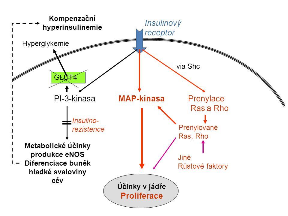 PI-3-kinasa MAP-kinasa Prenylace Ras a Rho