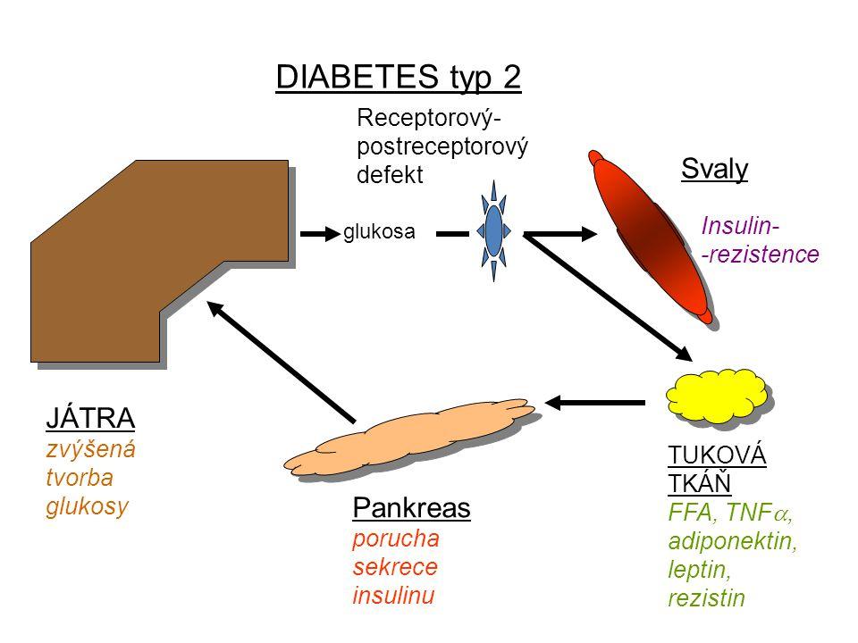 DIABETES typ 2 Svaly JÁTRA zvýšená tvorba glukosy